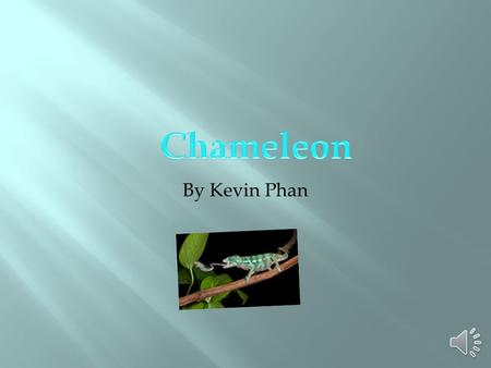 By Kevin Phan. These classification are:  Mammals  Reptiles  Amphibians  Fish  Birds.
