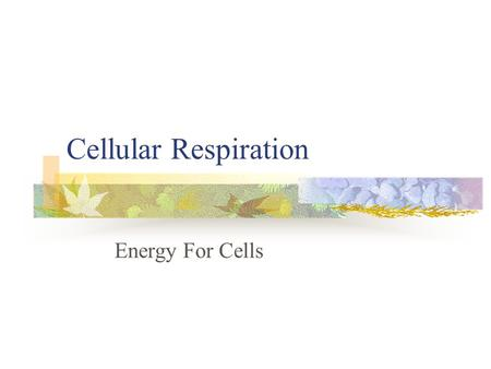 Cellular Respiration Energy For Cells.