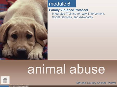 animal abuse module 6 Family Violence Protocol