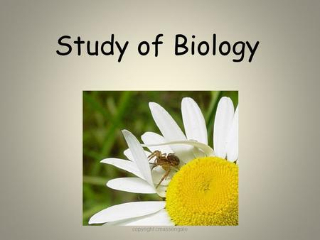 Study of Biology copyright cmassengale1. What is Biology? Biology is the study of all living things Living things are called organisms Organisms include.
