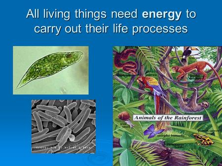 All living things need energy to carry out their life processes