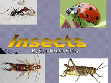 By Charlie and Finley. Contents 1 Title 2 Ladybirds 3 Flies 4 Bees 5 Dragonflies 6 Queen bee 7 Glossary.