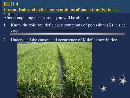 Morphological Characteristics of High Yielding Rice
