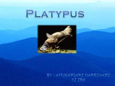 Adaptations of the Platypus adam Ohl - ppt video online download
