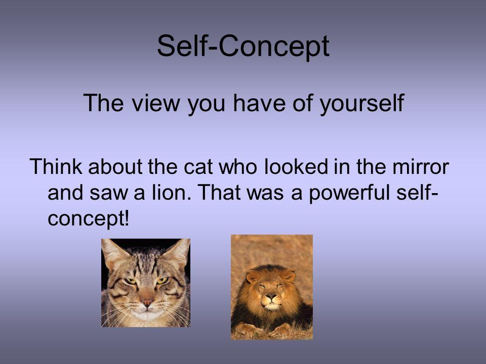Lion mirror cat cat that
