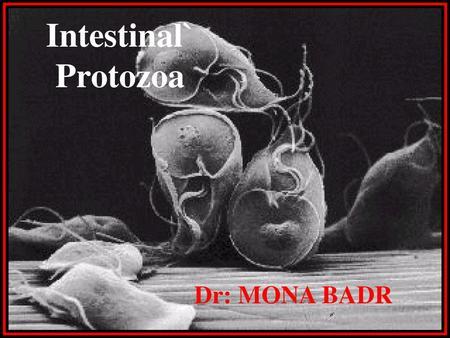 Protozoan paraziták emberben ppt, A protozoák férgek