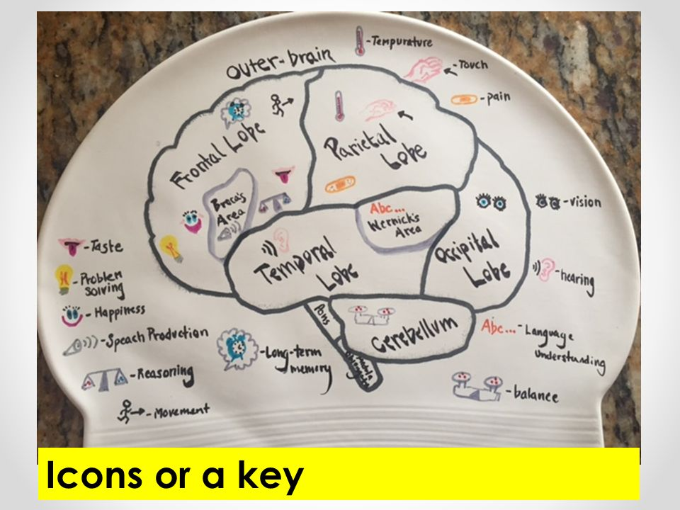 Swimmers Cap On Brain Diagram - Search For Wiring Diagrams •
