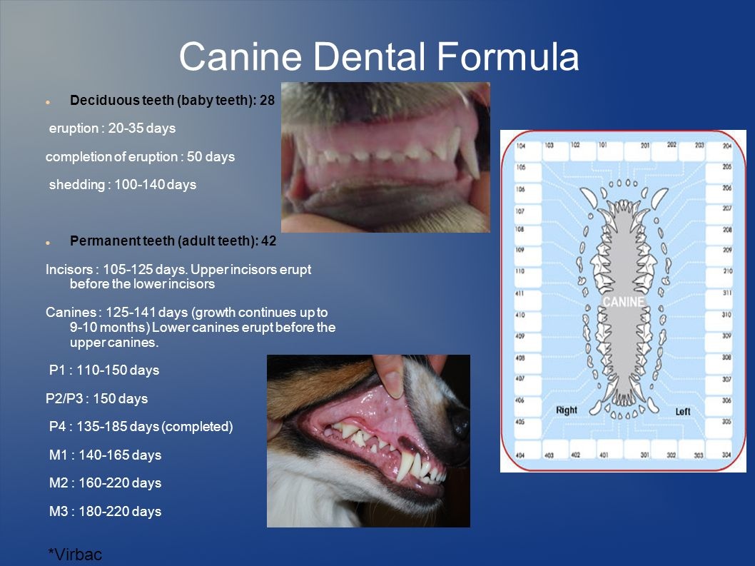 dental prophylaxis in dogs and cats