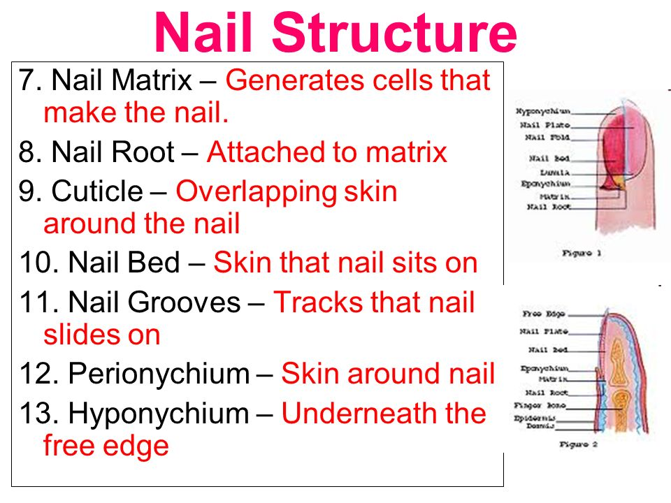 4 Nail Structure