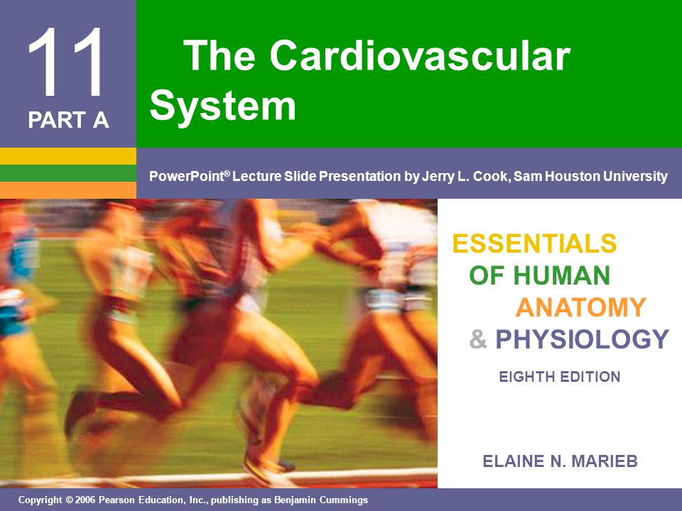 The Cardiovascular System - ppt download