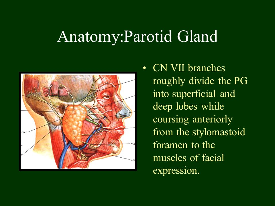 Salivary Glands & Disease - ppt download