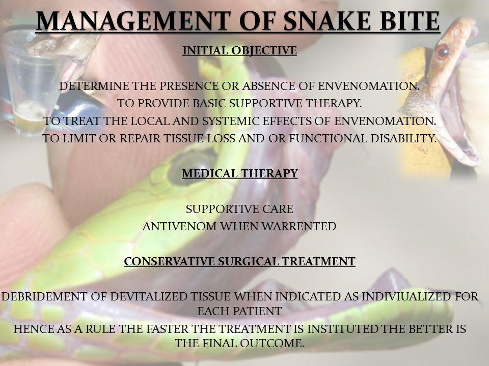 Snakes. - ppt video online download