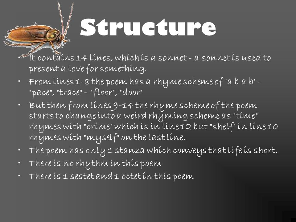 the cockroach poem analysis