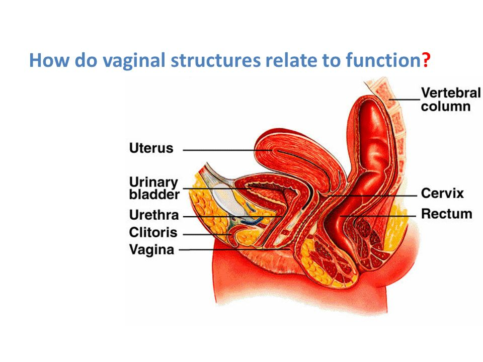 Vaginal support structures
