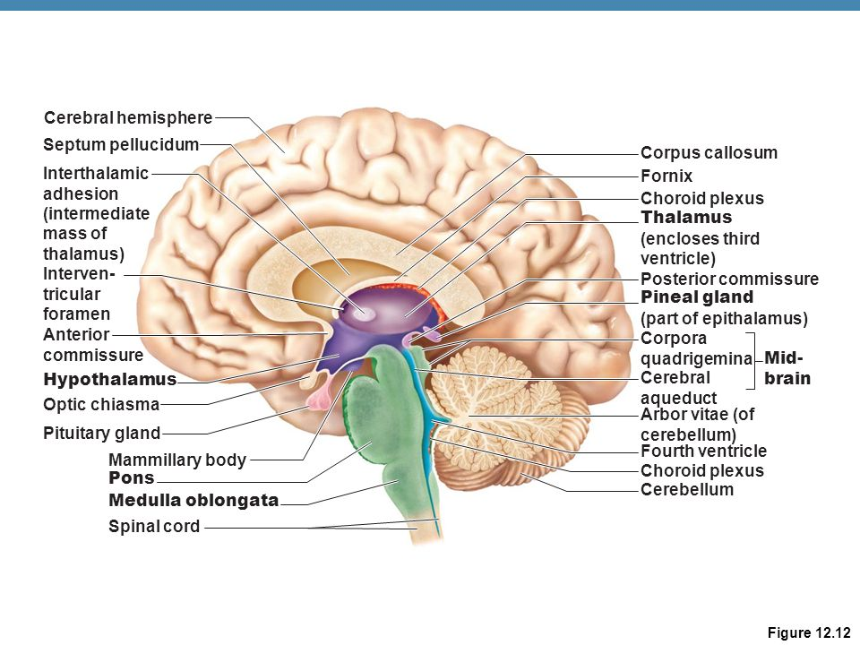 Hypothalamic Function Ppt Video Online Download