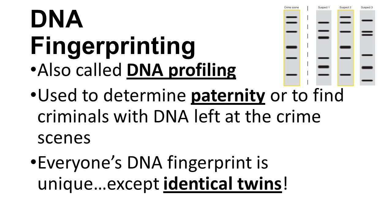 Worksheets Dna Fingerprinting Worksheet gene technology notes genomes dna fingerprinting recombinant 3 fingerprinting