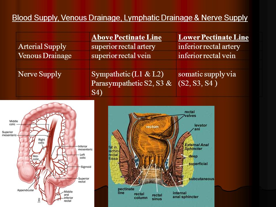 Blood Supply, Venous Drainage, Lymphatic Drainage & Nerve Supply