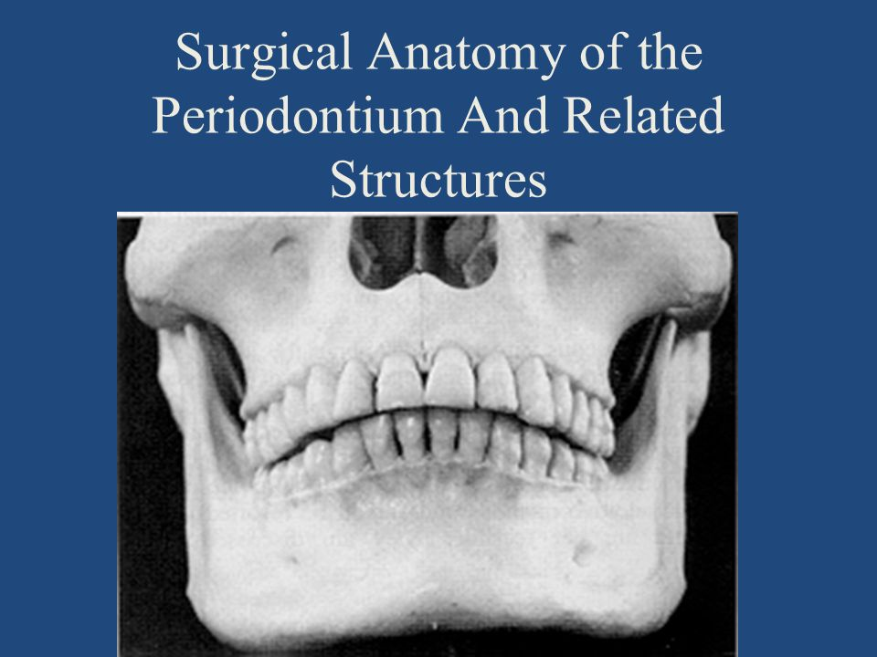 Surgical Anatomy Of Periodontium And Related Structures 61 Ppt
