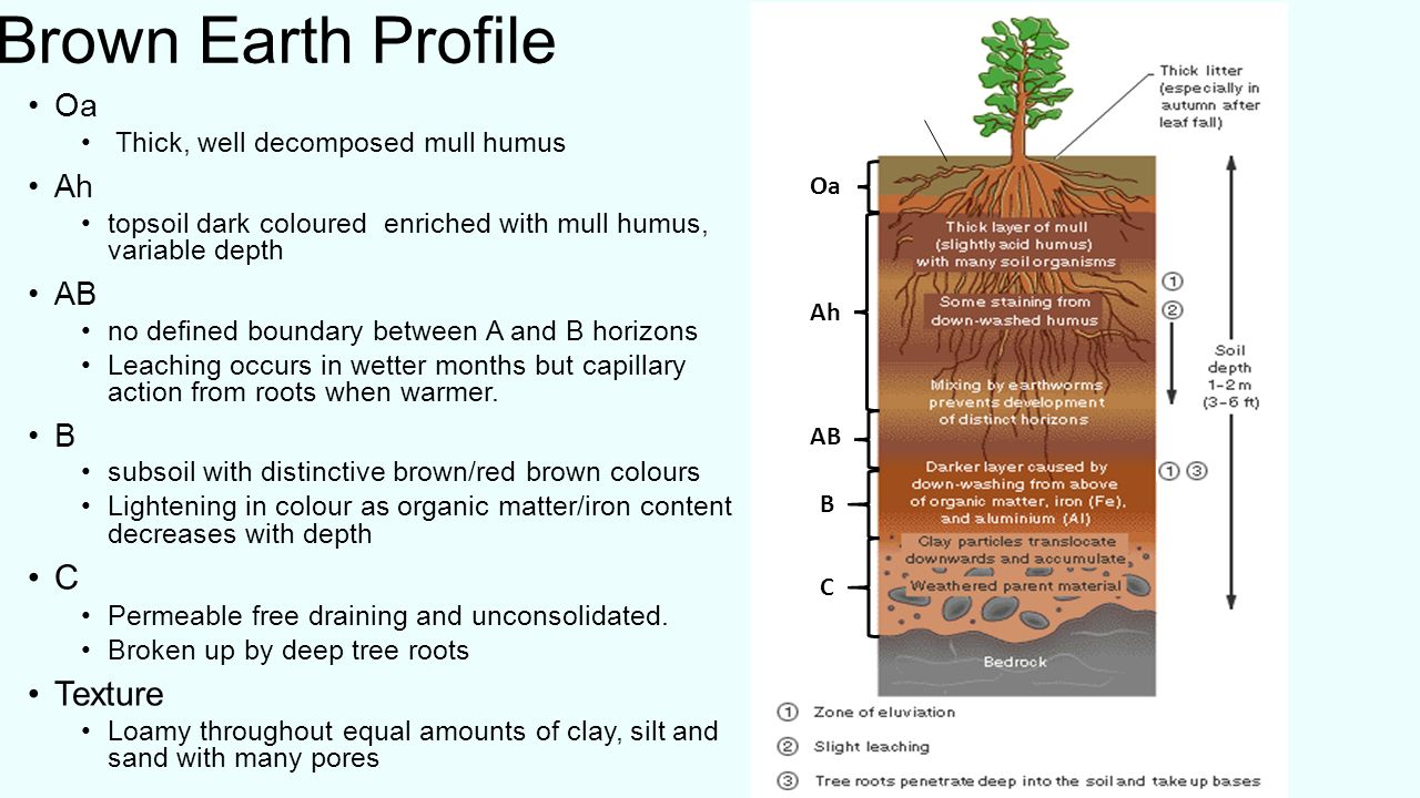 what is soil? soil is a combination of four main components: - ppt