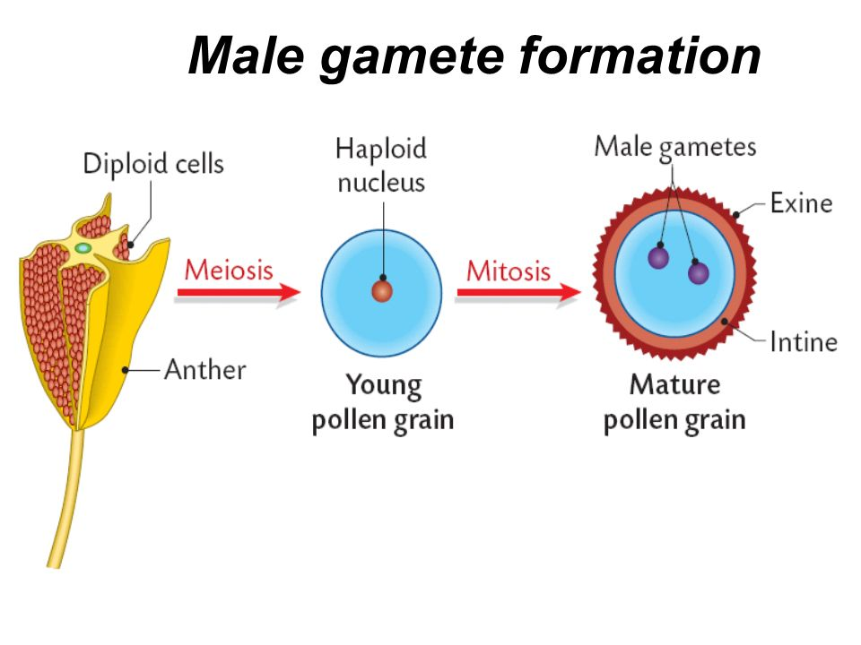 Pin On Male Enhancement Product