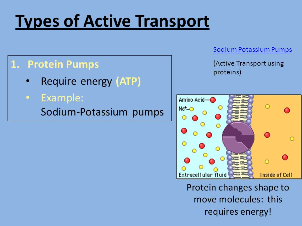 facts on active transportation Active transport is done so cells get what they need, such as ions, glucose and amino acids active transport proteins in general, molecules move from an area of higher concentration to an area of lower concentration.