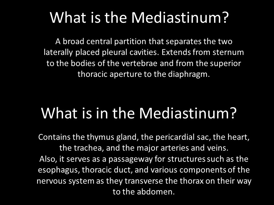 Lab Mediastinum Ppt Video Online Download