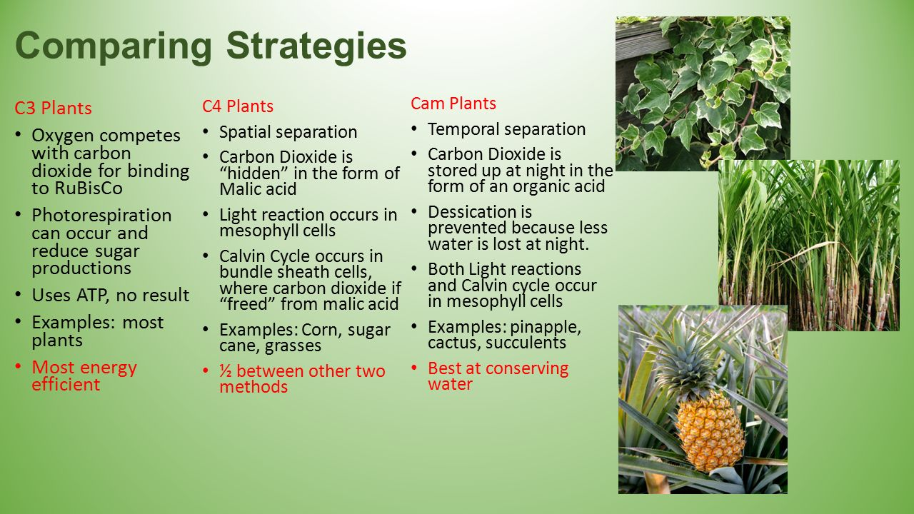 Photosynthesis Cellular Energy Ppt Download