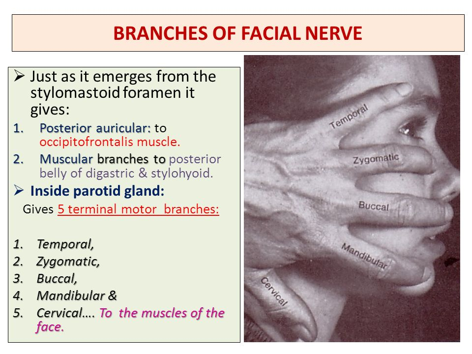 Nerves Of The Face 5th 7th Cranial Nerves Ppt Video Online Download