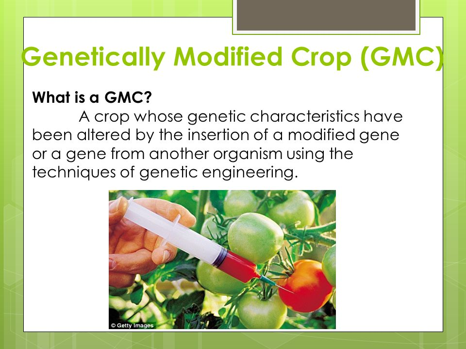 genetically modified crops ppt download