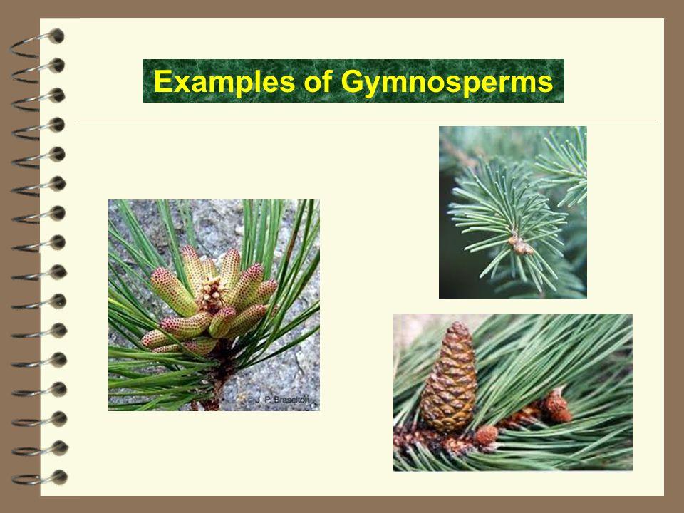 Nonflowering Plants Ppt Video Online Download