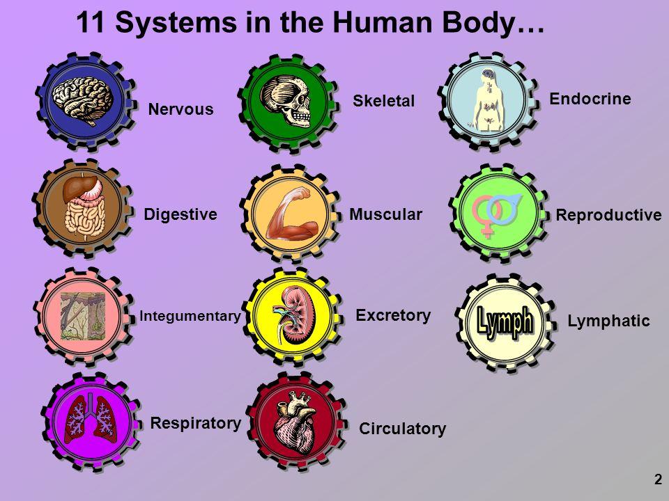 Organ Systems Teamwork. - ppt video online download