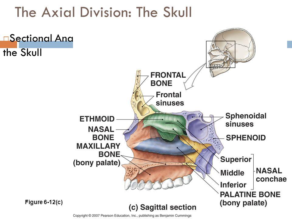 Skull Axial Division Diagram - House Wiring Diagram Symbols •