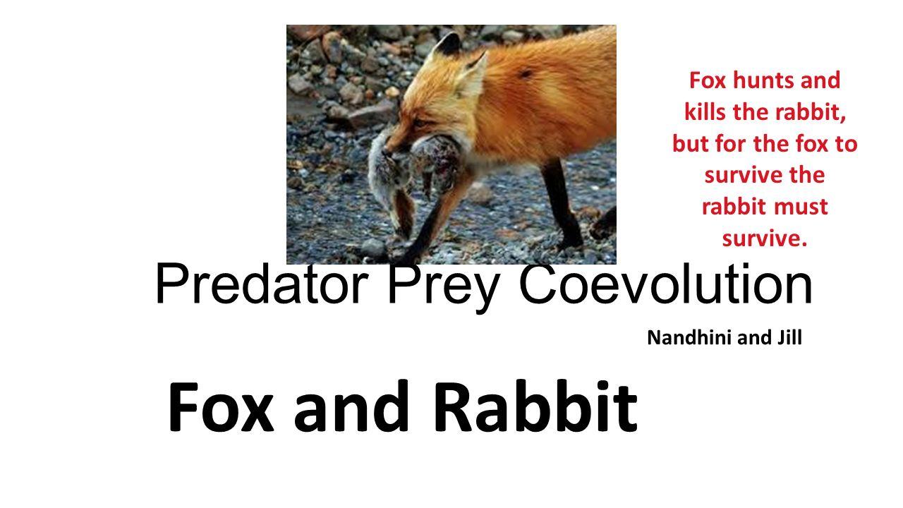 Coevolution ap biology ppt video online download.