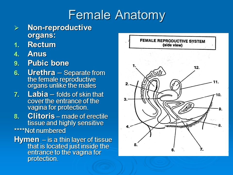 Reproductive Health and Safety - ppt video online download