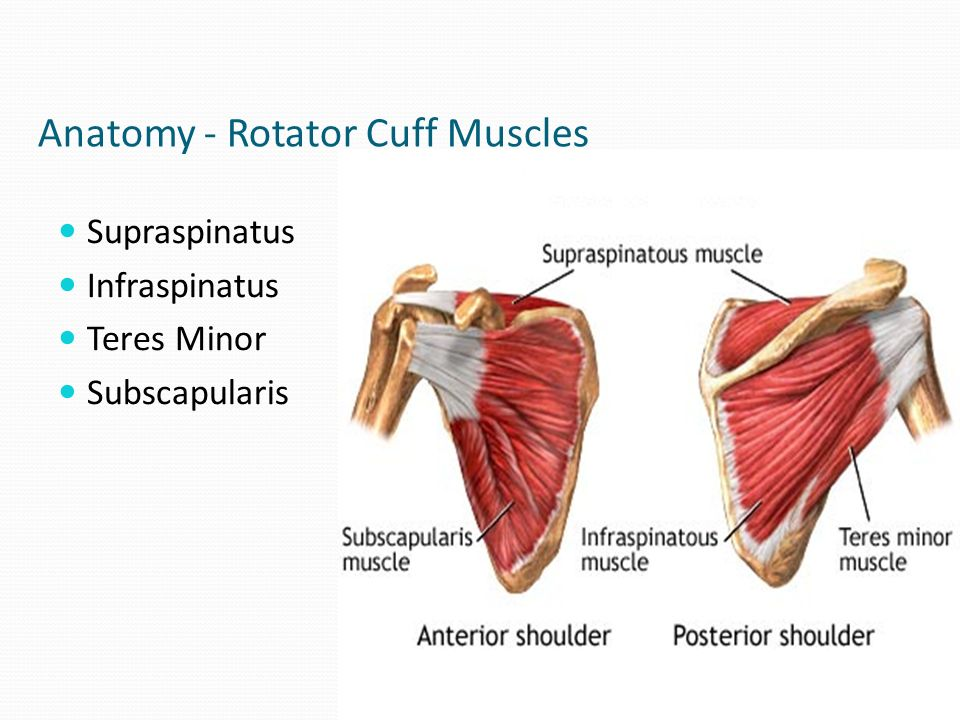 Shoulder Pathologies and Physiotherapy Sharon Dekkers MSc MCSP - ppt ...