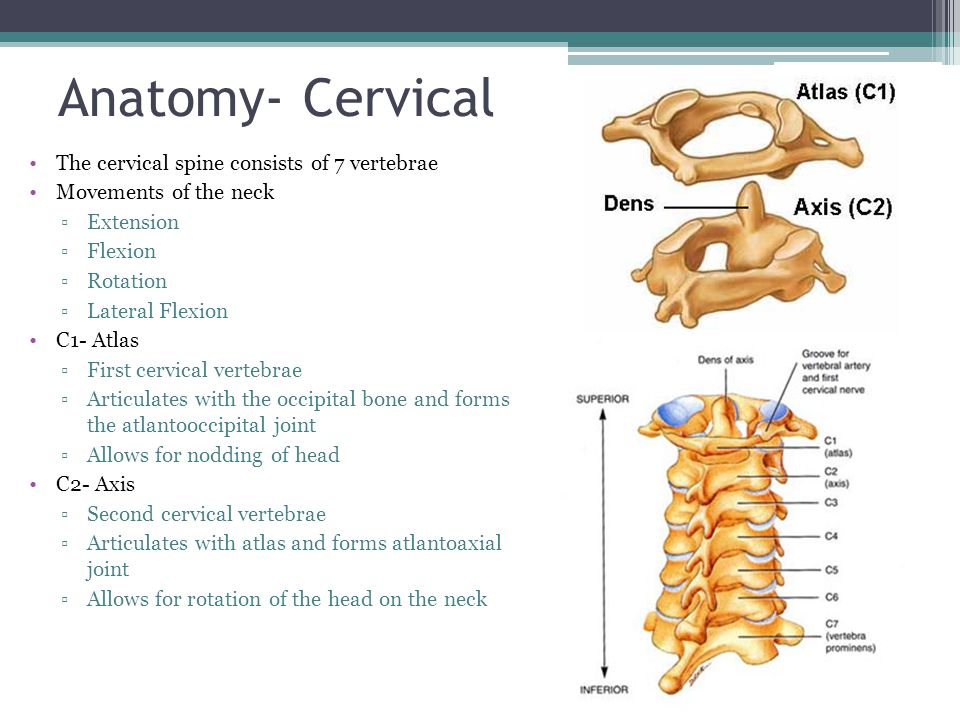 Injuries to the Spine. - ppt video online download