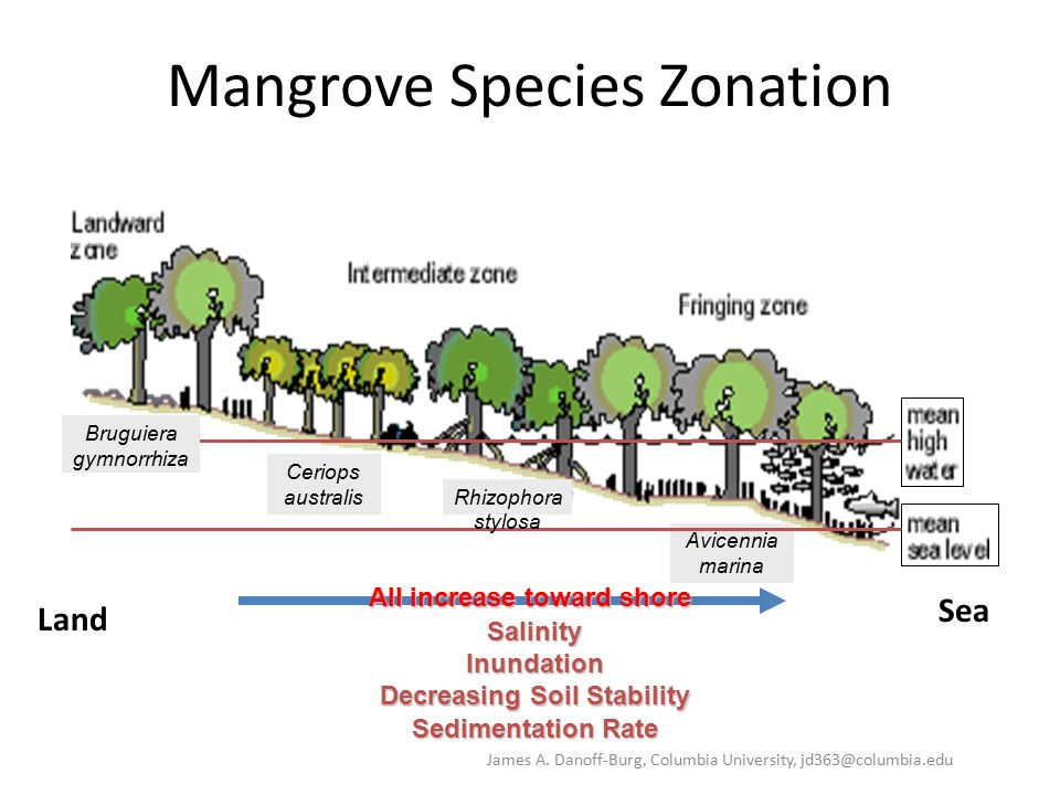 MANGROVE ZONATION EBOOK