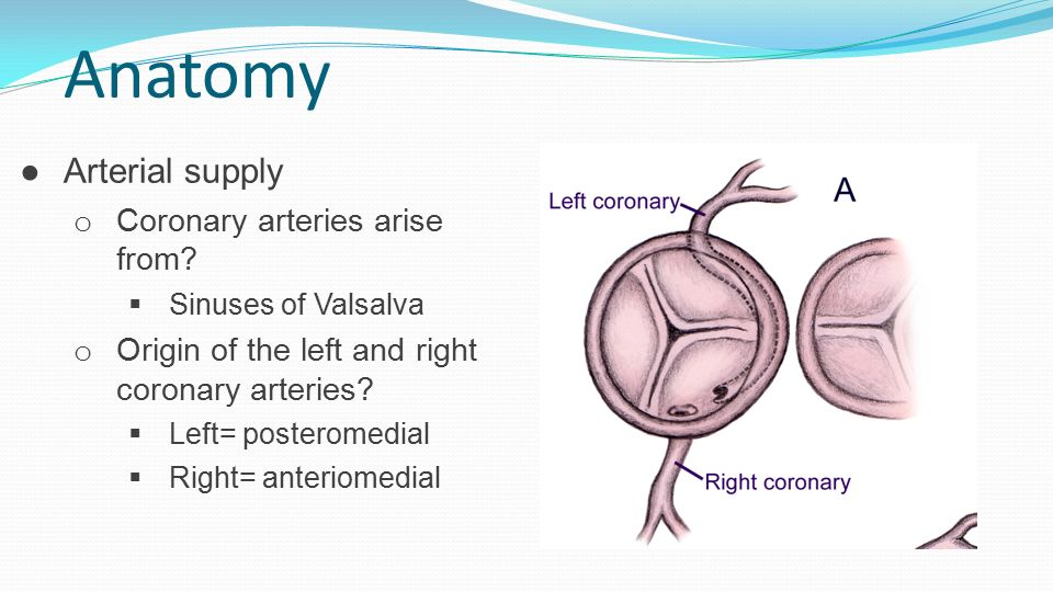 Cardiac Surgery Core ppt download