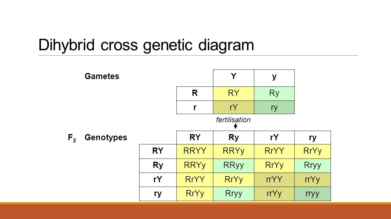 Genetics. - ppt download