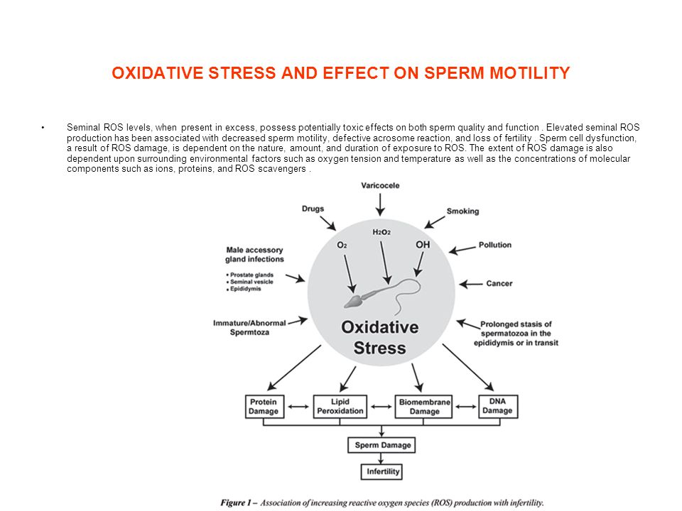 OXIDATIVE STRESS AND EFFECT ON SPERM MOTILITY