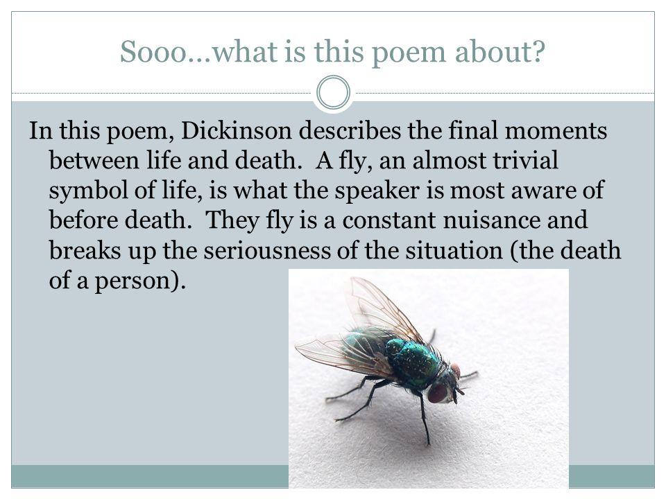 emily dickinson i heard a fly buzz analysis