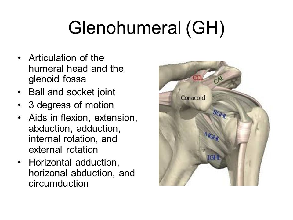 Anatomy Of The Shoulder Ppt Video Online Download