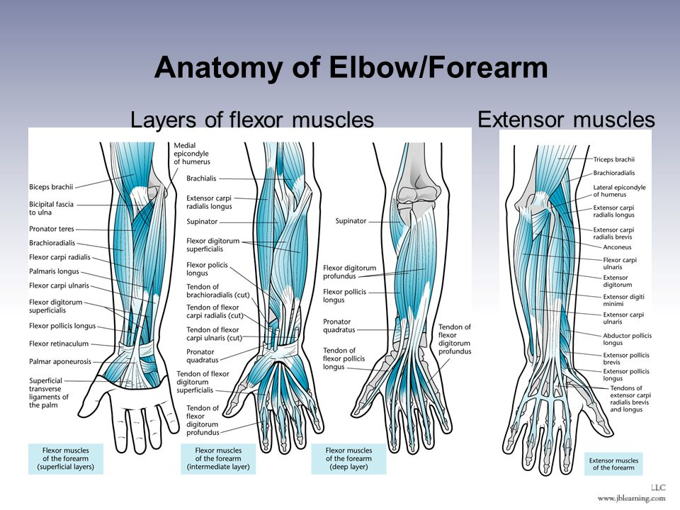 Injuries To The Arm Wrist And Hand Ppt Video Online Download
