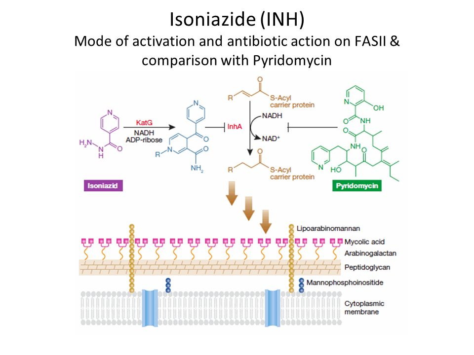 Isoniazide (INH) Mode of activation and antibiotic action on FASII & comparison with Pyridomycin
