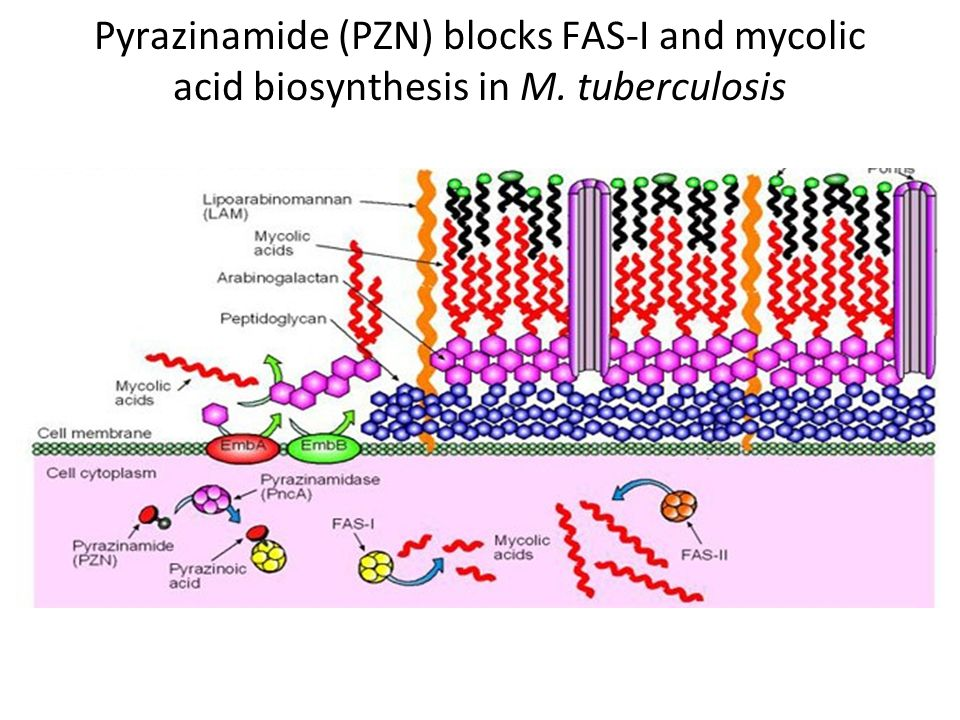 Pyrazinamide (PZN) blocks FAS-I and mycolic acid biosynthesis in M