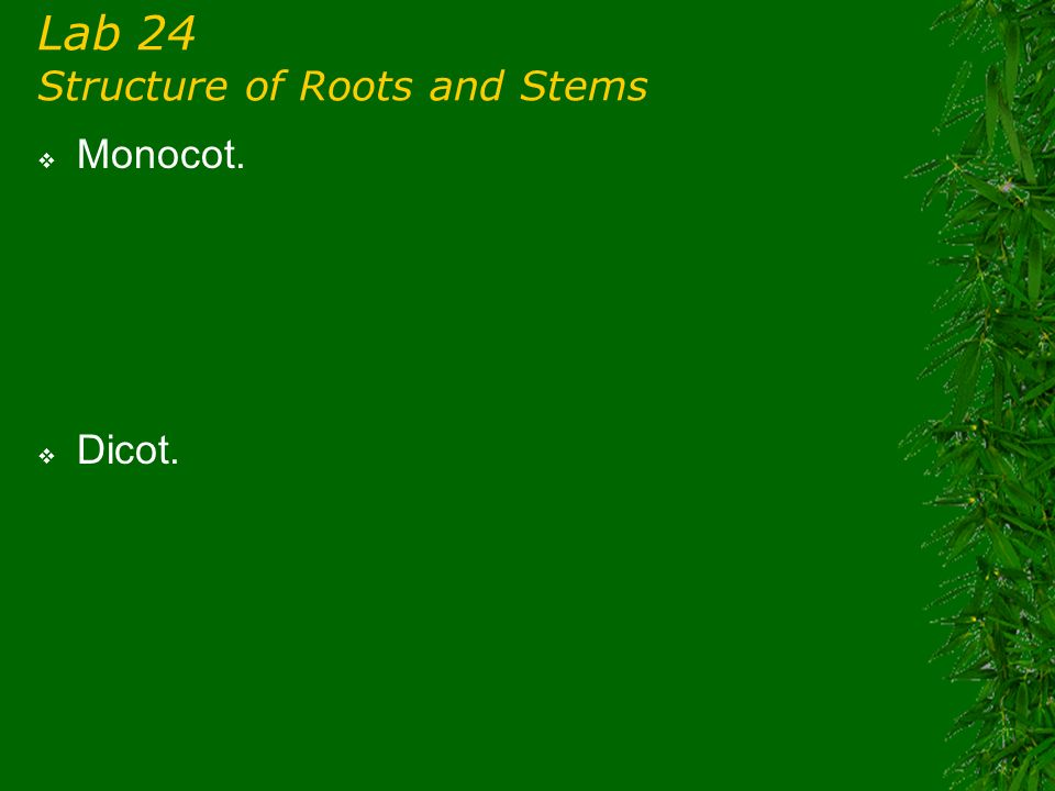 Lab 24 Structure of Roots and Stems