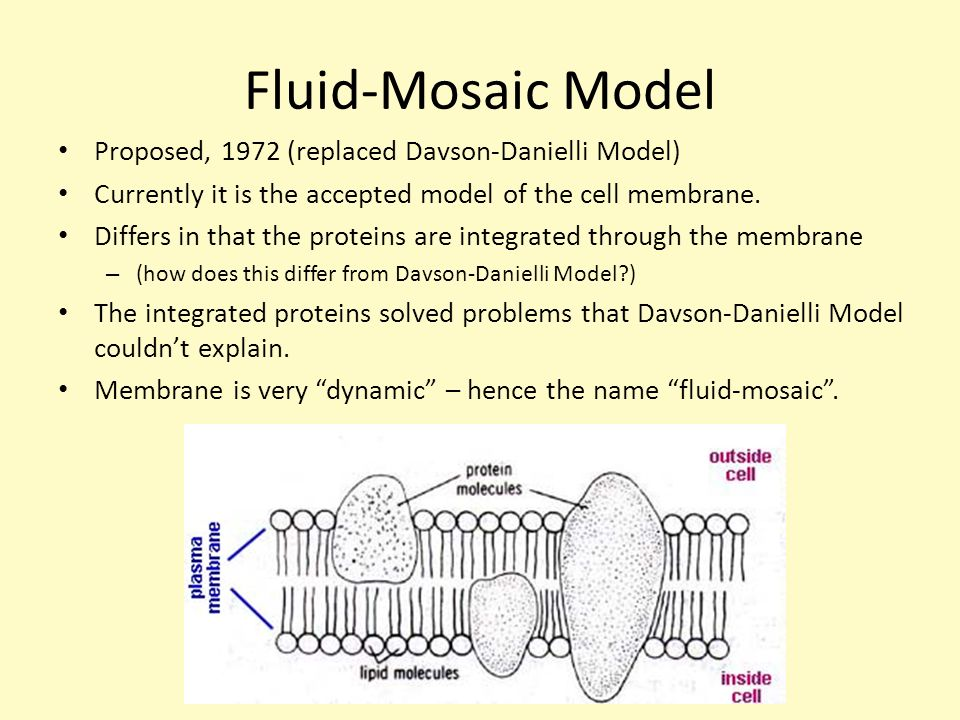 With the help of diagram explain the fluid mosaic model complete the fluid mosaic model of the cell plasma membrane dummies rh dummies com 1 3 mr mcgee ib biology hl ppt video online download rh slideplayer com ccuart Image collections