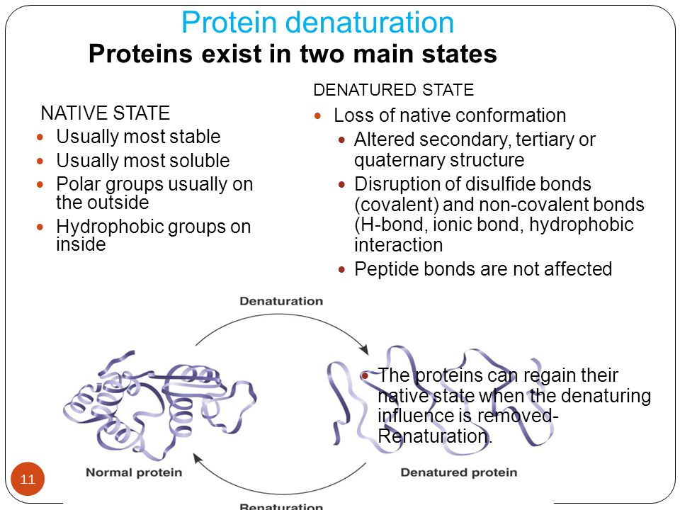 11 protein denaturation