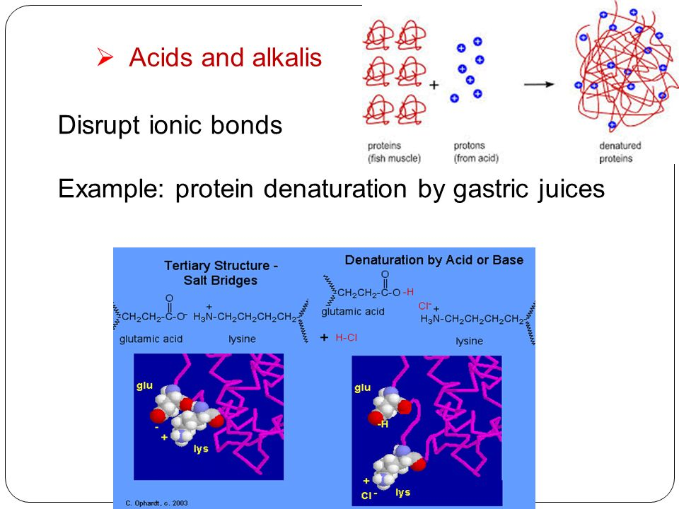 18 acids and alkalis disrupt ionic bonds example protein denaturation by gastric juices