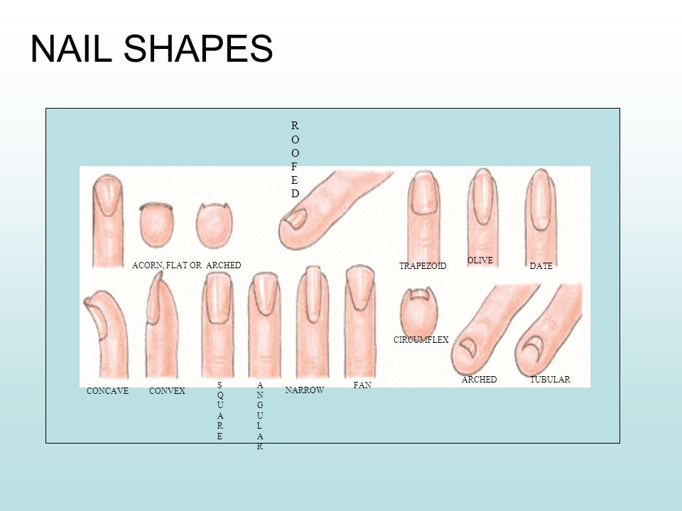 Study Of The Nail Copyright 2013 C SAP